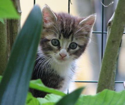 Carmen's kitten