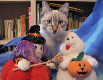 Peekaboo and the Halloween puppets