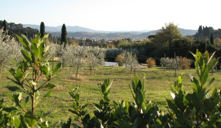 View of an olive grove, with Florence in the background