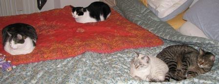 Quattro gatti sul letto!